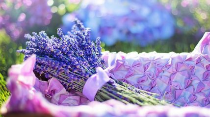 lavender-fresh-flowers-herbal